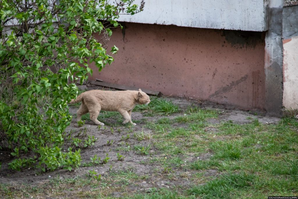 Кіт долає сильний зустрічний вітер між будинків, прямуючи невідомо куди, у невідомих важливих справах. Фото - Андрій Дубчак
